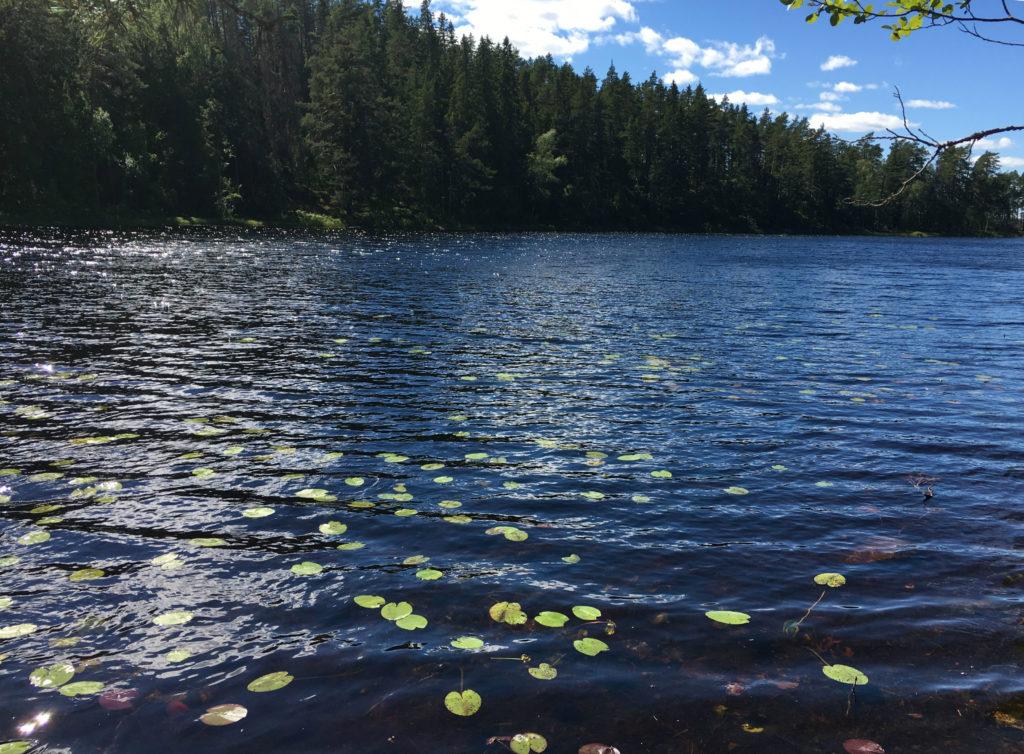 Lago Svezia con ninfee