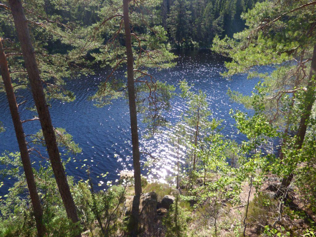 Alberi e lago in Svezia