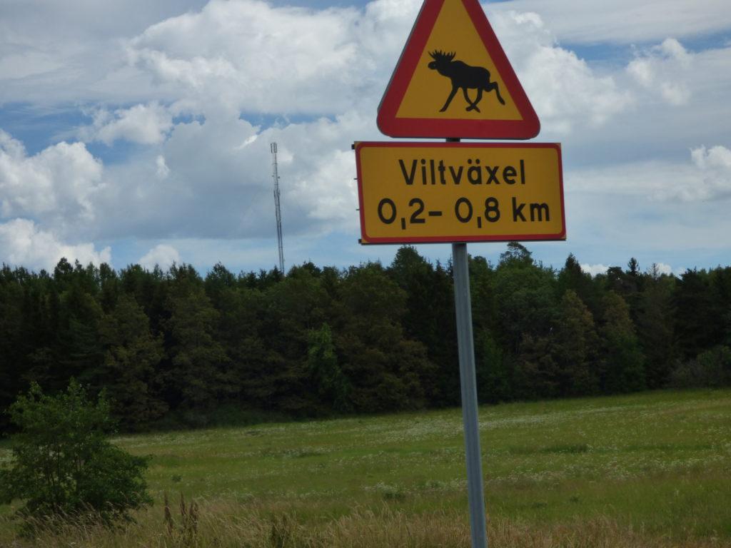 segnale stradale di attraversamento alci