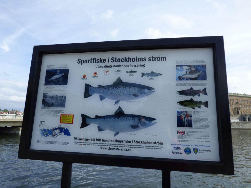 Pesca a Stoccolma