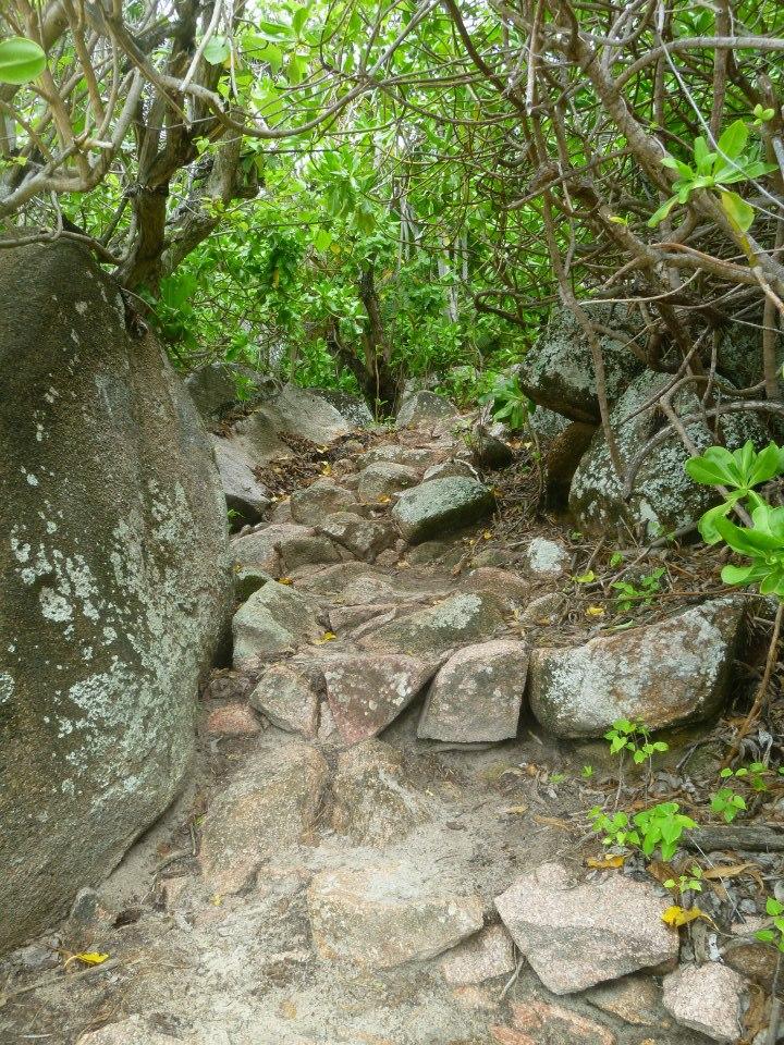 shinrin yoku nella giungla