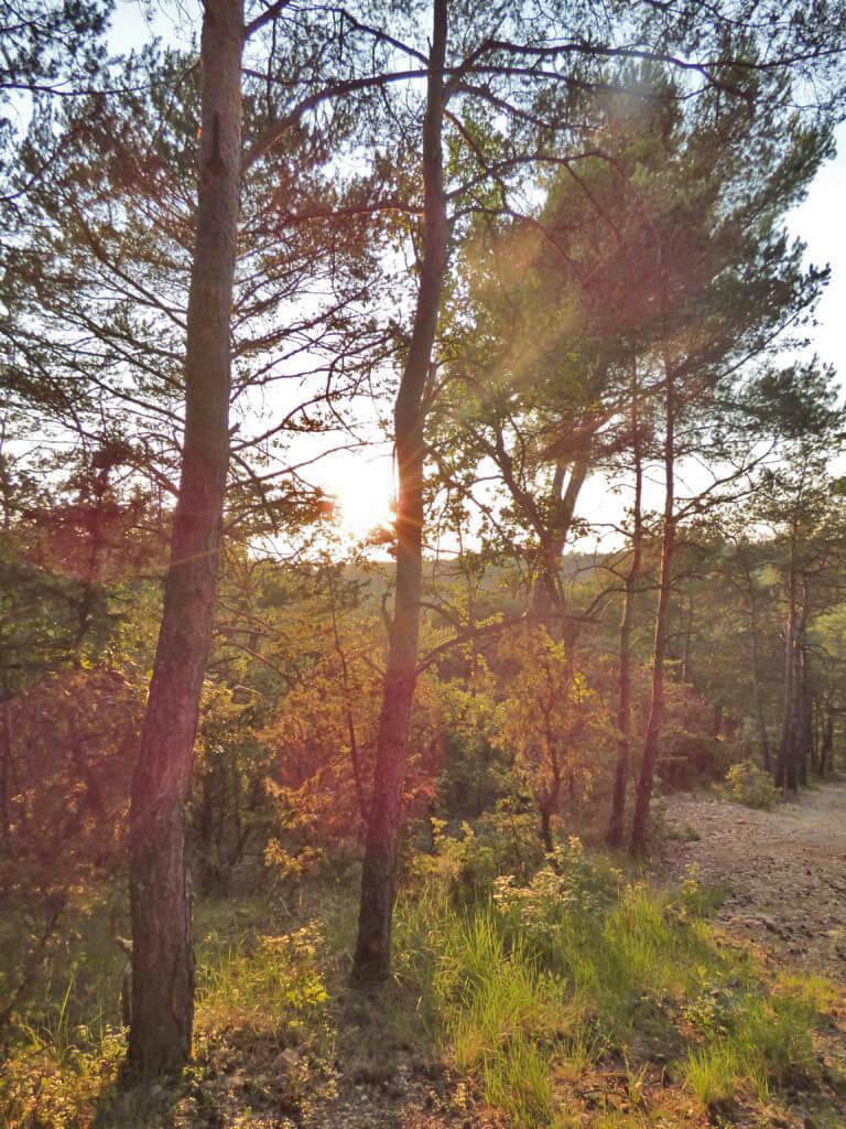 Tramonto tra gli alberi a Montagnac