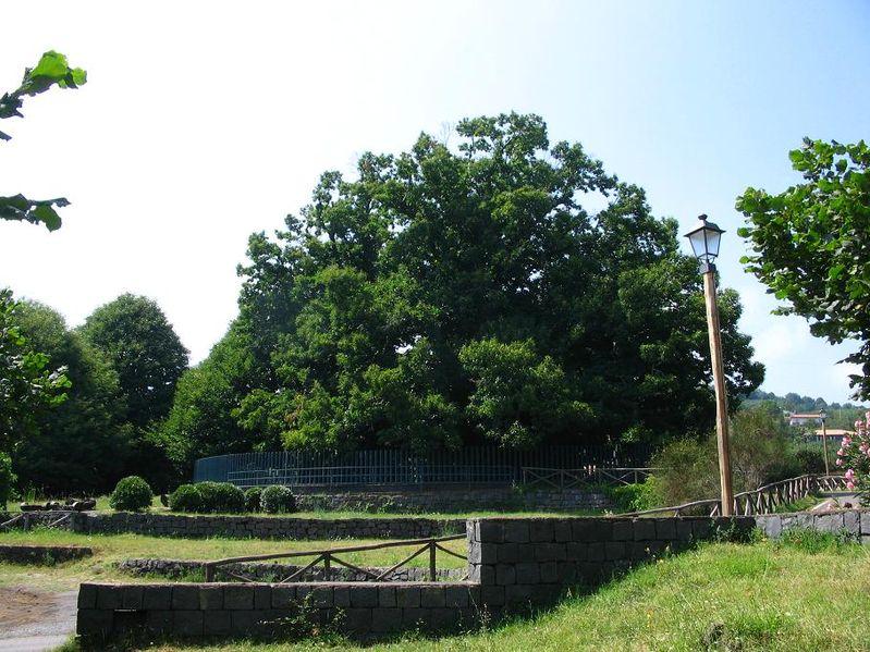 albero monumentale, Lu Castagnu di li Centu Cavaddi
