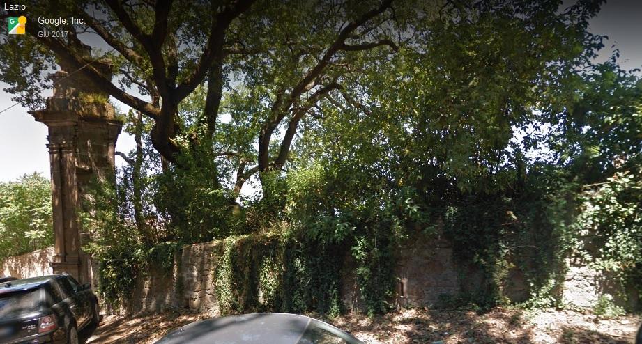 Alberi monumentali, quercia del Cancellone