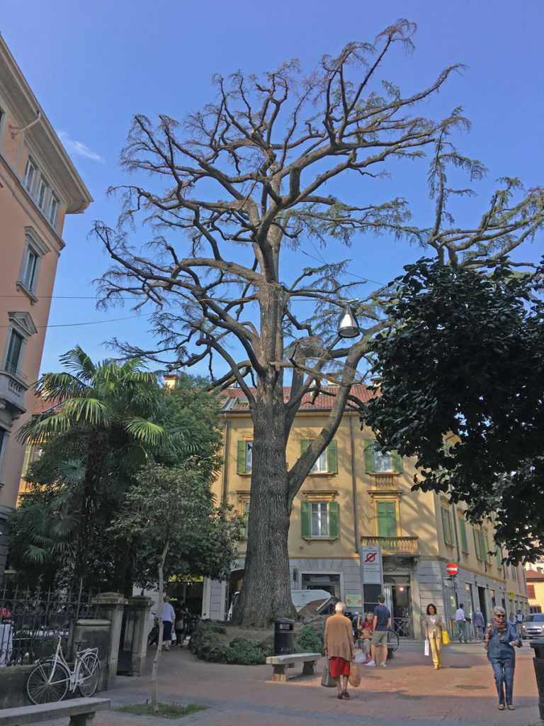 Il Piantone di Varese
