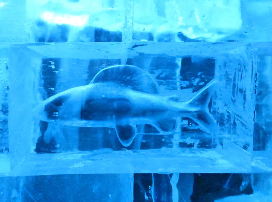 blocco di ghiaccio con pesce