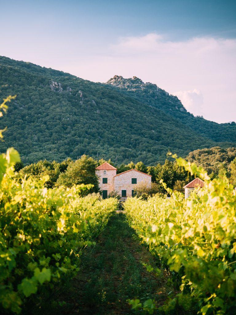 La verde Corsica [Photo by Tom Grimbert on Unsplash]
