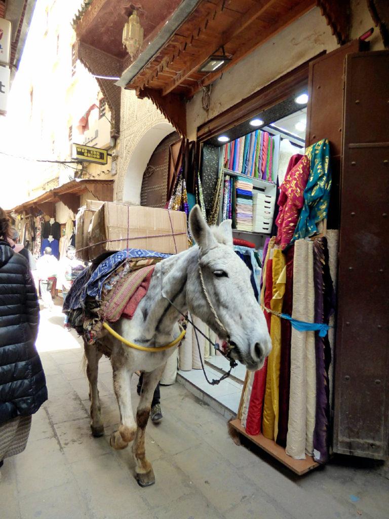asino nella medina Marocco