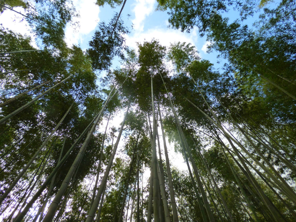 La foresta di bambù di Kyōto e non solo: cosa vedere ad Arashiyama