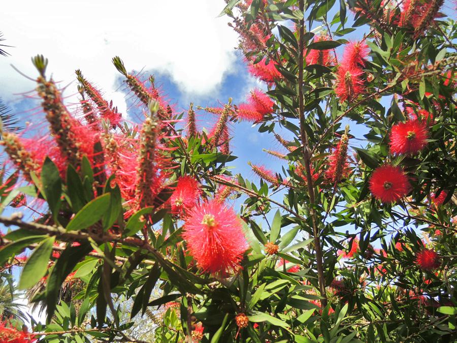 fiori all'orto botanico di roma