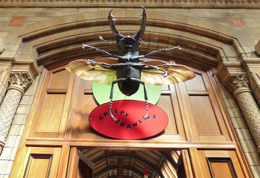 Museo Scienze naturali insetti