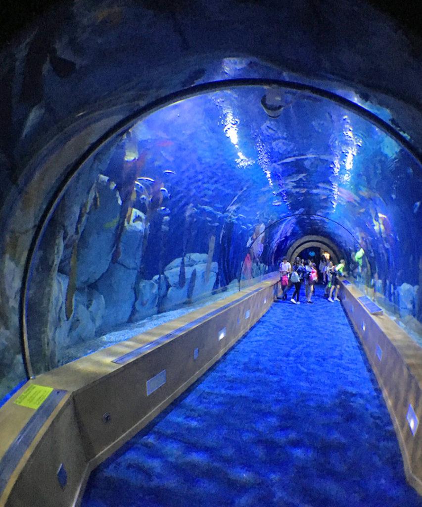 Il tunnel degli squali all'Oceanogràfic di Valencia