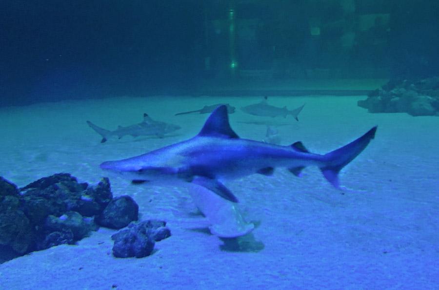 squalo valencia