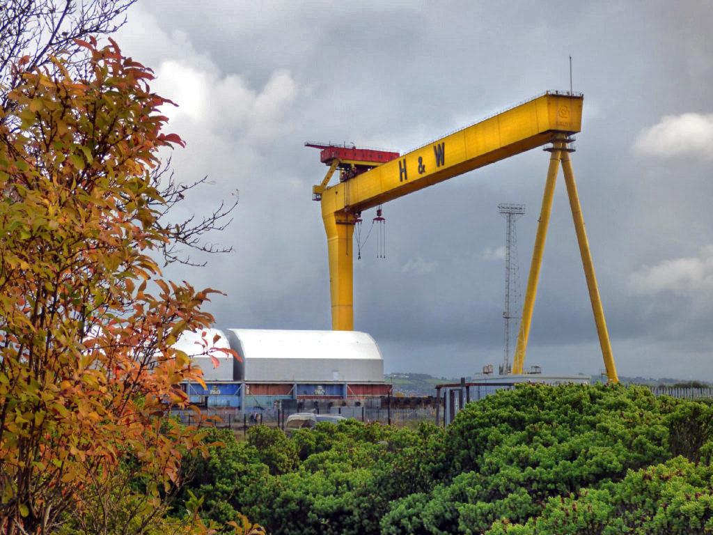 Gru gialla Belfast